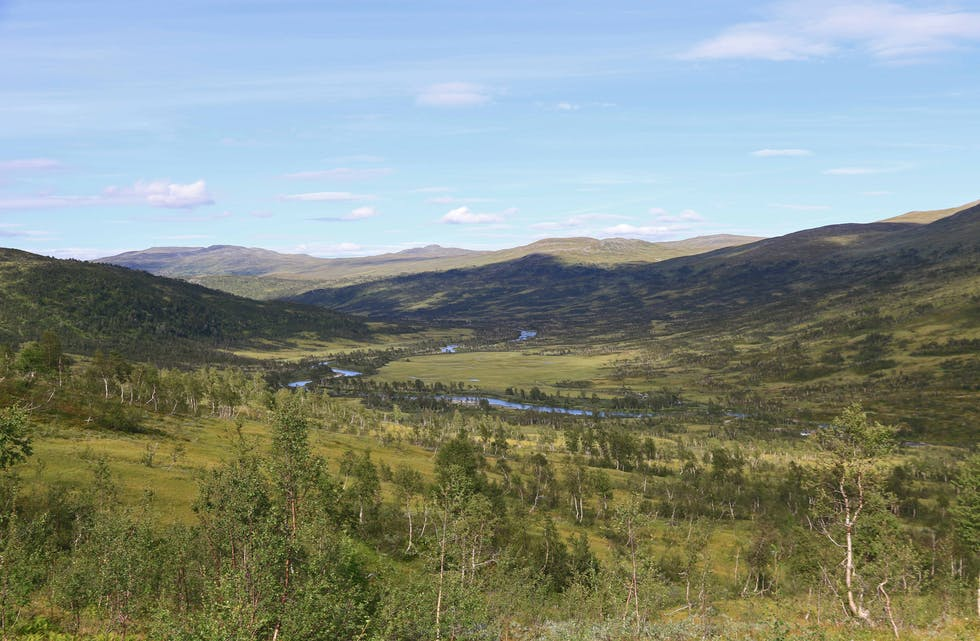 Nordlandsruta går blant annet gjennom vakre Spjeltfjelldalen i Hemnes kommune.