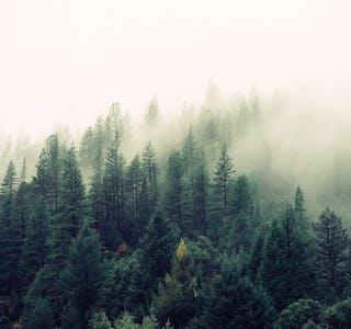 Statsforvalteren foreslår ytterligere vern av i alt 50 673 daa skog fordelt på 19 ulike verneområder på statsgrunn i Grane, Hattfjelldal, Vefsn og Hemnes.